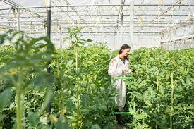 Devenir botaniste : formations, débouchés, salaire...