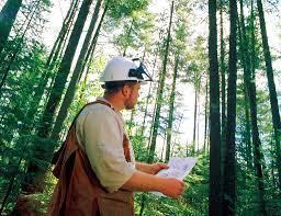 Ingénieur forestier | CSMOAF - Comité sectoriel de main-d'oeuvre en  aménagement forestier